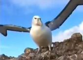 Apprendre une poésie: Baudelaire «L'Albatros»
