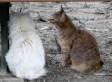 «Les chats» de Daniil Kharms